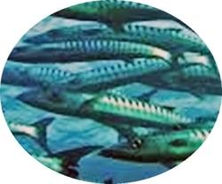 Fish-Circle